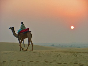 camel-trek